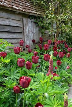 Great Dixter, Northiam, East Sussex, UK