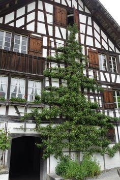 Ballenberg outdoor museum near Interlaken, Switzerland.. amazing!