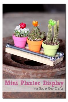 DIY Mini Planter Display