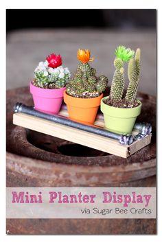DIY Mini Planter Display