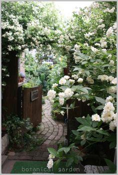 botaniの庭通信~小さな楽園から~の画像