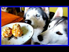 NO BAKE PEANUT BUTTER DOG COOKIES | Snow Dogs Snacks 49 | DIY DOG TREATS - YouTube