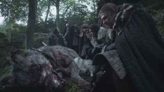 Let's start at the very beginning. Remember the dead direwolf that had been killed by a stag in the first episode?