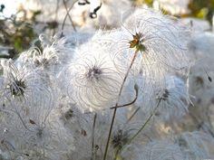 Winter garden from slowlovelife.com