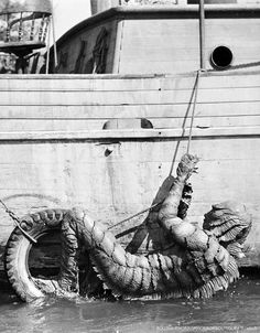 Great shot of the Creature from the Black Lagoon!