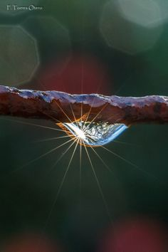 One drop, one world. by Francisco Torres Otero on 500px○