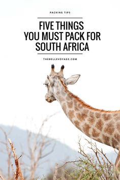 Need help packing for South Africa?  This post has packing tips and a list of the five pieces of travel gear that are must-haves for what will be the trip of a life time!  Whether you're going on safari, visiting Cape Town, or the Winelands, click through to read a guide on everything you need to pack if you plan to travel to South Africa.