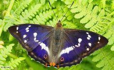 La belleza, las formas y los colores de estas mariposas son deslumbrantes. Es increíble pensar que algunas de ellas podrían extinguirse pronto.