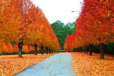 Fall Walk 2013-11-25 01.12.36