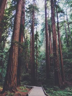 Anxiety is one little tree in your forest. Step back and look at the whole forest. Unknown Fondo Para Wsp, Wallpaper Paisajes, Free People Blog, Redwood Forest, Photo Diary, Iphone Wallpaper, Iphone Backgrounds, San Francisco, Wanderlust