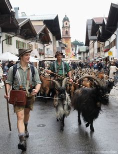 Mittenwald, Germany  (maybe not expected when you turned the coner but how very cool)