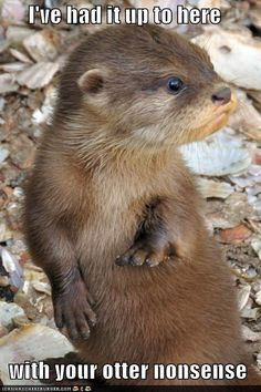 funny pictures - I've had it up to here  with your otter nonsense