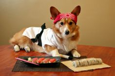 Corgi-san. I can't believe he/she isn't devouring the sushi. Maybe it's plastic.