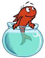 The Fish 21