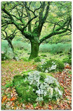 ✯ Fairy Tales - Andalucia