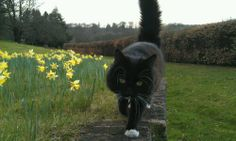 Moss is our feline resident at Greys Court. Kittens, Cats, National Trust, Cute Pictures, Dog Cat, Babies, Random, Friends, Grey