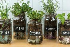 Herbes Aromatiques : 15+ Façons Astucieuses de Les Faire Pousser en Intérieur