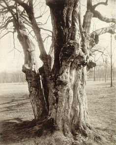 * Eugene Atget - Saint-Cloud