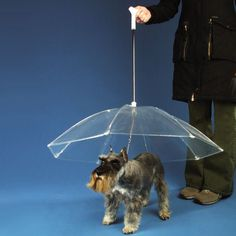 The Dogbrella. This is the funniest thing ever! I love how it's a schnauzer in the add too!