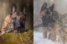 L'insolita amicizia tra un cane e una civetta [FOTO]