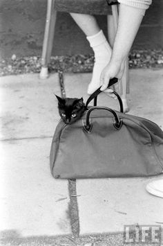Ralph Crane, Black Cat Auditions In Hollywood, 1961.