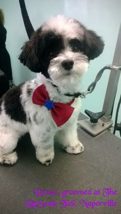 The UpScale Tail, Pet Grooming Salon, Naperville. www.theupscaletail.com