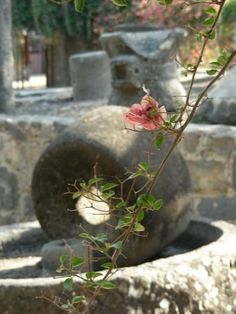 Olive press and millstones in Capernaum, Israel Israel Palestine, Jerusalem Israel, Israel History, Ancient History, Heiliges Land, Visit Israel, Israel Travel, Early Christian, Holy Land
