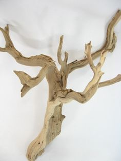 16.69 SALE PRICE! Create a unique piece by integrating these natural ghostwood branches into your floral arrangement or add them with moss, grasses, or succu...