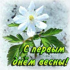 Открытка с первым днем весны #весна #началовесны #открытка #первыйденьвесны #1марта Good Morning, Places To Visit, Spring, Holiday, Plants, Cards, Gifs, Quote, Buen Dia