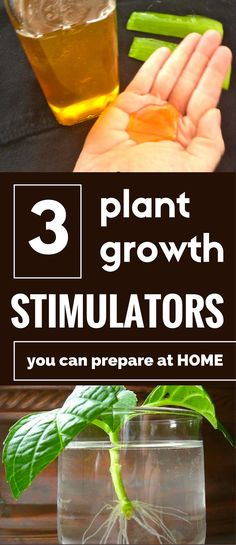 3 plant growth stimulators you can prepare at home.