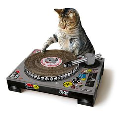 """""""Two turntables and a microphone..."""" This DJ CAT SCRATCHING PAD 