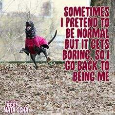 Yup. Greyhounds are the goofiest.                                                                                                                                                     More