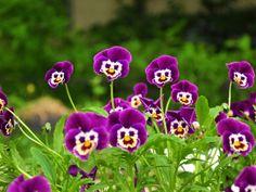 #93 cvijeće