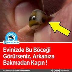 Evinizde Bu Böceği Görürseniz, Arkanıza Bakmadan Kaçın Ve Hemen Yardım İsteyin