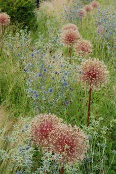 Grass field landscape and garden architects - Innen Garten - Eng Flower Landscape, Landscape Design, Outdoor Plants, Garden Plants, Garden Grass, Beautiful Gardens, Beautiful Flowers, Prairie Garden, Exterior