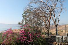 Kafarnaum, położone nad Jeziorem Tyberiadzkim na północy Izraela.