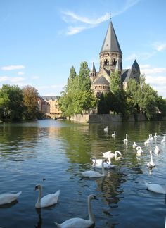 Temple Neuf and swans on the Moselle River, Metz, France
