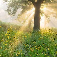 Gestalten Sie einen wilden Lebensraum im Garten - #Gartengestaltung