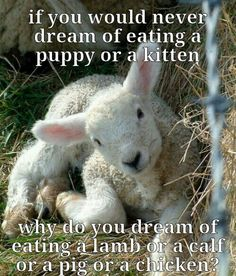 Why? Why do we harm the innocent when we have no need for the very flesh and bones and organs they need to live?