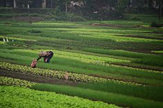 Woman Farming in Northern Vietnam. Travel photography by aroundtheisland on etsy.