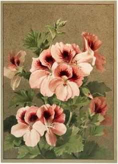 Vintage Pink Flowers Image