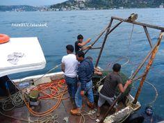Mit rejt vajon a fekete kagyló héja...? Merida, Istanbul, Fair Grounds, Travel, Viajes, Destinations, Traveling, Trips