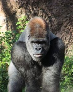 Endangered Rainforest Animals