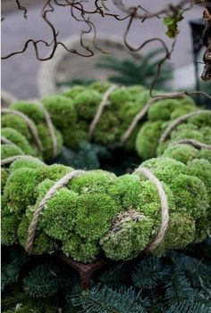 LOVE the moss wreath! make in summer with moss by deck. Noel Christmas, Green Christmas, Winter Christmas, Christmas Wreaths, Christmas Crafts, Christmas Decorations, Xmas, Moss Wreath, Twine Wreath