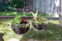 cute tea cup terrarium - would be fun to make with a young daughter or little girl that you're babysitting..... a nice afternoon together kind of thing