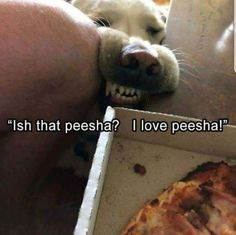 Who doesn't love... peesha? #funnydoglaughter