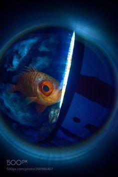 Eye by horie39 #nature #photooftheday #amazing #picoftheday #sea #underwater