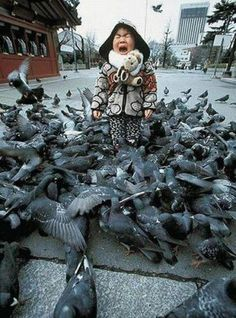 This is exactly how I feel when I see one pigeon walking towards me. I would die if I was surrounded. Bird Attack, Heart Attack, Que Horror, Horror Films, Foto Poster, Funny Commercials, Poor Children, We Are The World, Pigeon