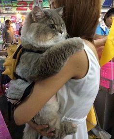 Caturday cuddles