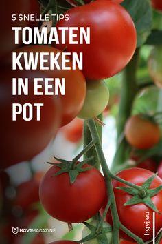 Growing Herbs, Growing Vegetables, Fruits And Vegetables, Vegetable Garden, Garden Plants, Garden Planning, Gardening Tips, Urban Gardening, Harvest